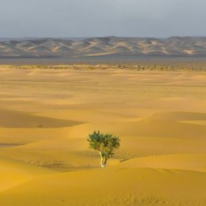 A tree amidst the desert to signify job search during recession